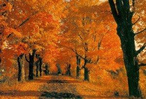 triste autunno
