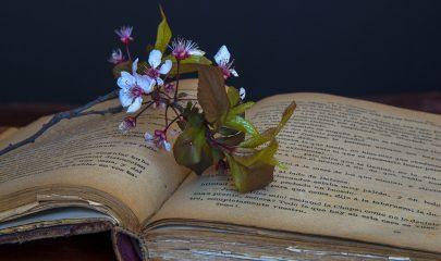 bookfarm
