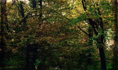 bosco isolino, foto dona de carli 4